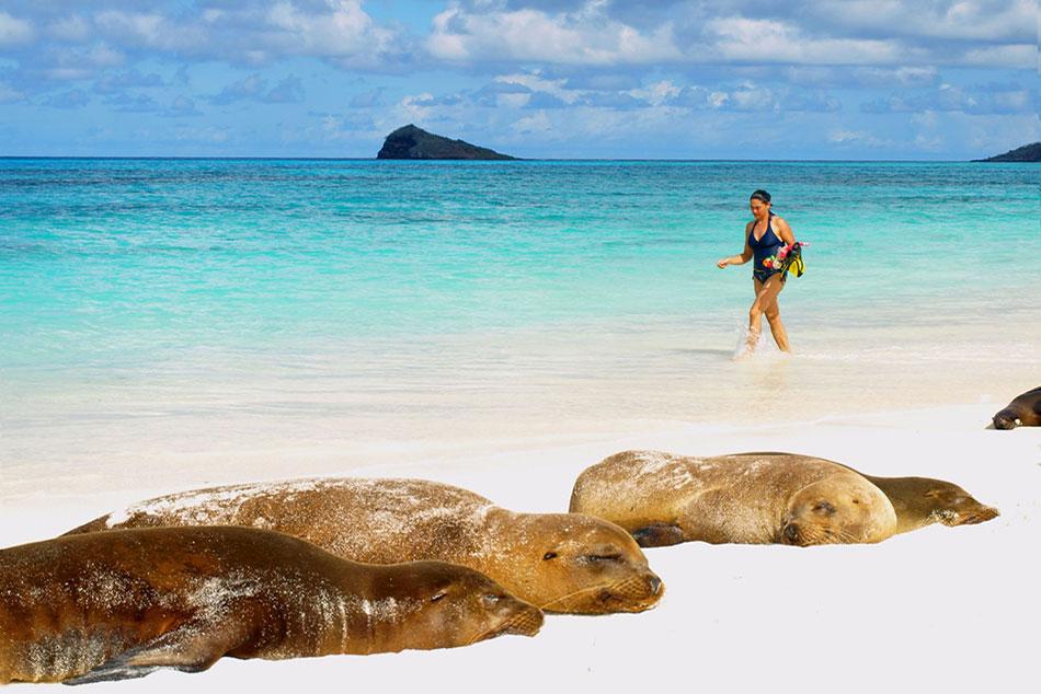 3-Sea-Lions-Espanola-Island-Sea-Star-Journey