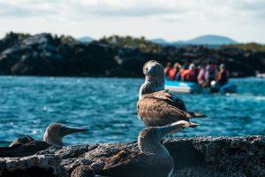 Galapagos Cruises Luxury