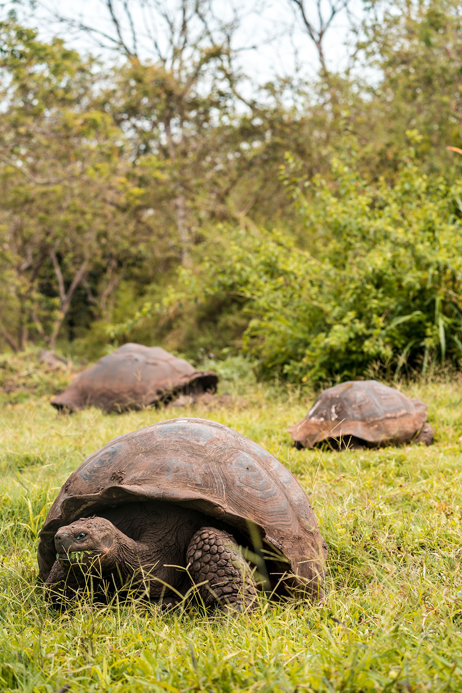 Galapagos 10 Day Luxury Cruise