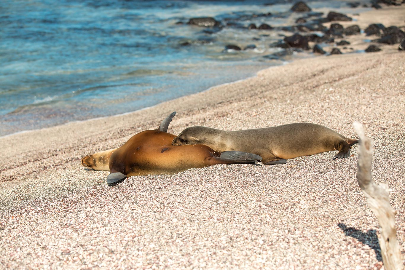 Galapagos-(15)-1366