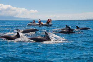 Galapagos 6 Day Cruise