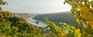 Riesling & More Wine Cruise