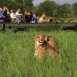 African Safari River Cruises