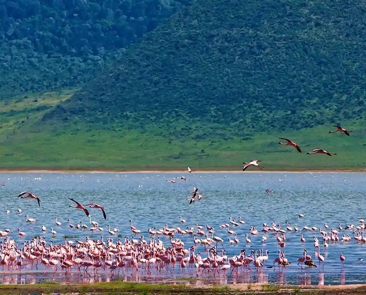 goldentrails_Ngorongorocrater_sh