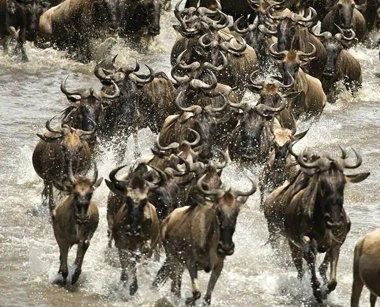 goldentrails_serengeti_tanzania