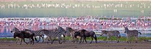 African Safari River Cruises