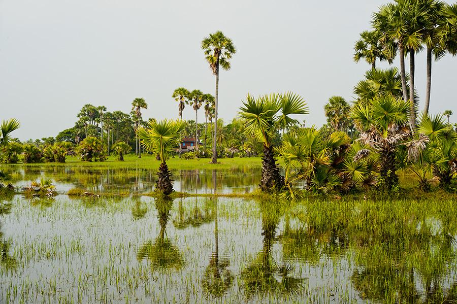 VIETNAM - RICE FIELDS