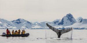 Falklands, South Georgia & Antarctica Cruise