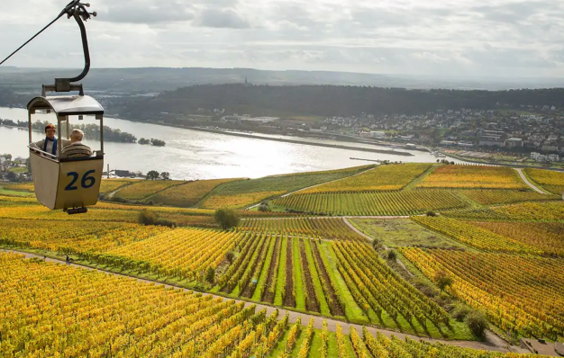 Rhine and Mosel Vineyards