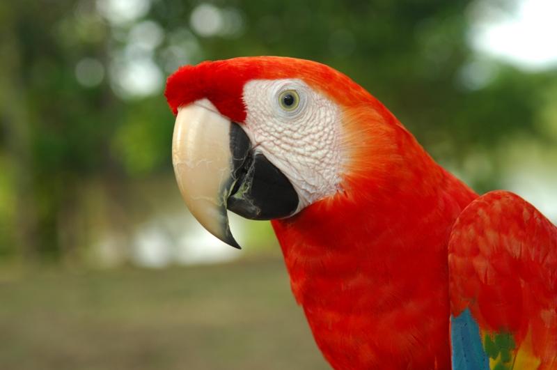 Macaw - Low Resolution