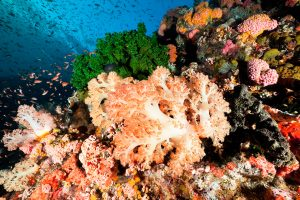 Cruise to Bali - 7 Nights from Komodo