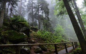Triberg Black Forest