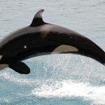 Puget Sound & San Juan Islands - North American Cruises