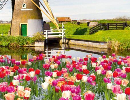Tulip Serenade Cruise